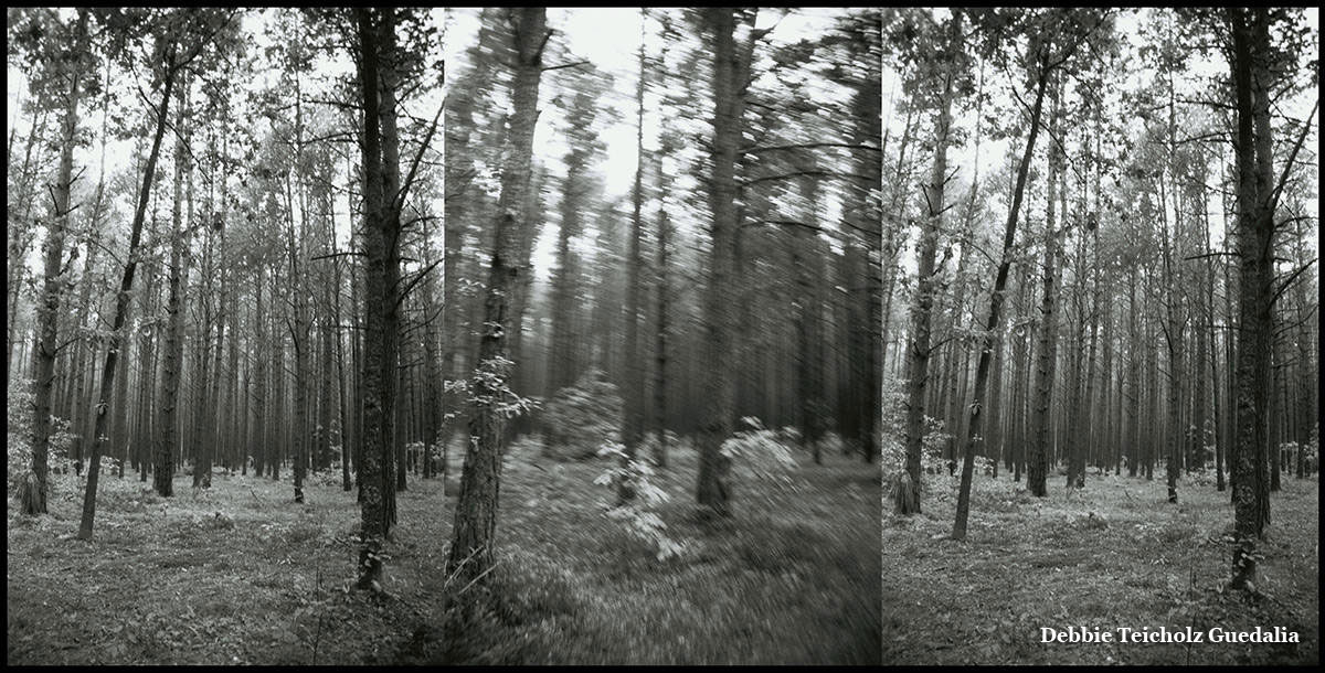 Black and white tripdych photograph of trees in the forest