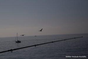 Fishing Pole over the sea, Birds flying, Malibu, California, 2019