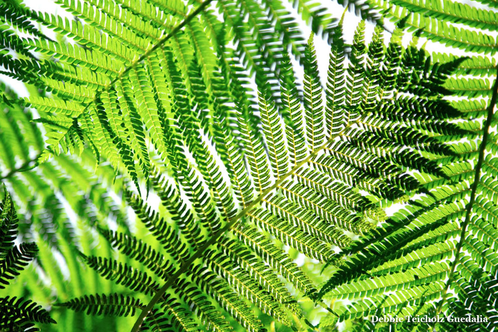 Close up of Green Web-like Ferns, Conservatory at the New York Botanical Garden, 2020